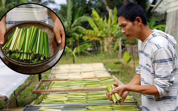 Ống hút cỏ bàng của chàng doanh nhân 8X Việt Nam gây ấn tượng mạnh với truyền thông quốc tế, dân mạng hết lời khen ngợi