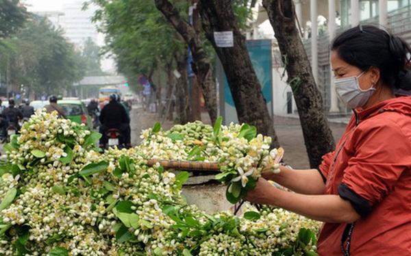 Kiếm bạc triệu nhờ bán hoa theo lạng trên phố Hà Nội