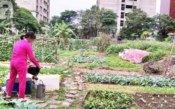 Xót xa những tòa chung cư cửa ngõ thủ đô hàng chục năm cỏ mọc xanh không được sử dụng