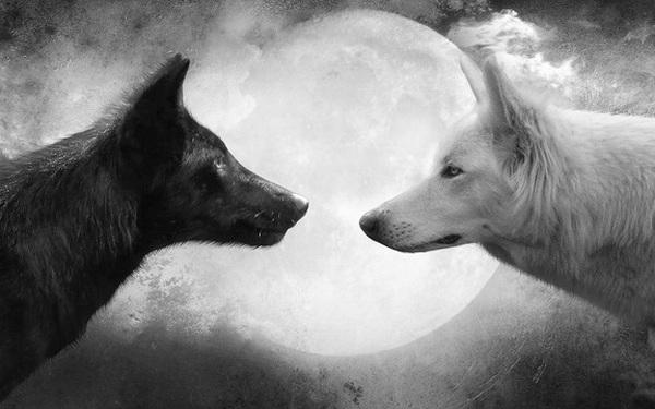 Thiện ác như hai con sói luôn đối đầu trong tâm trí nhưng trở thành kẻ ra sao do bạn tự quyết định