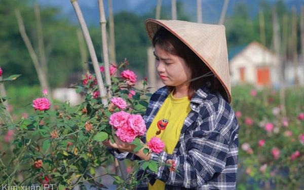 Người con của Cao Bằng đưa dâu tây Cao Bằng lên một tầm mới bằng gia đình, kiên trì và nông nghiệp thông minh
