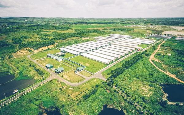 GREENFEED xuất khẩu heo giống tiêu chuẩn quốc tế ra thị trường khu vực