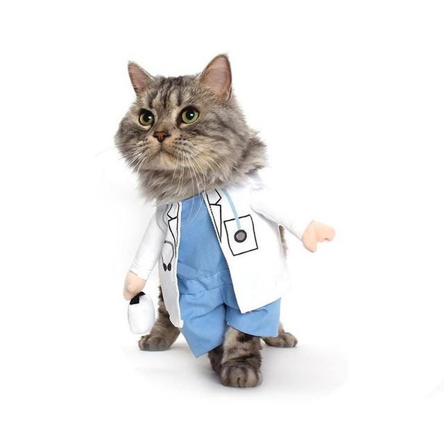 Nhờ khả năng này, loài mèo có thể là cứu tinh giúp thế giới thoát khỏi COVID-19 - Ảnh 1.
