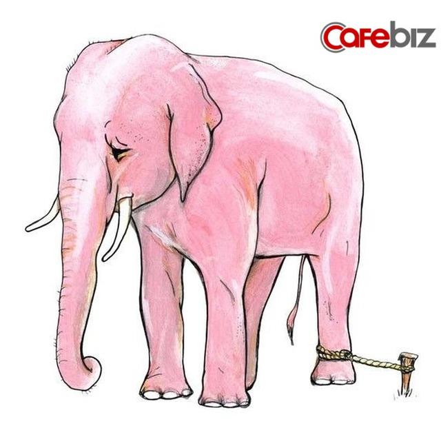 Cách bước ra khỏi vùng an toàn: Bài học từ chú voi 5 tấn bị trói bởi một sợi dây thừng nhỏ - Ảnh 1.