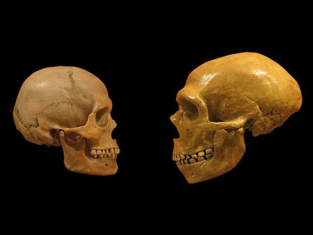 Chuyện lạ: Hàm răng của loài người là một sự tiến hóa lỗi? - Ảnh 2.