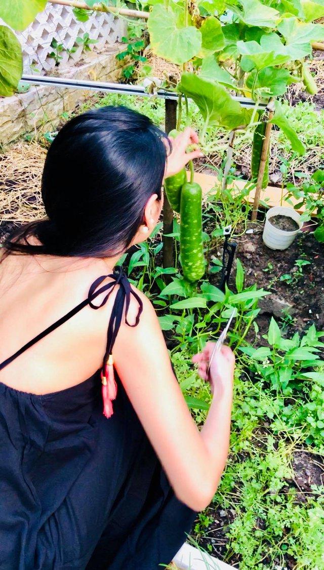 Cuộc sống giản đơn của vợ chồng Công Vinh - Thuỷ Tiên: Cùng nhau chăm sóc vườn rau sạch, tự tay thu hoạch củ quả, ăn không hết đem tặng hàng xóm - Ảnh 10.