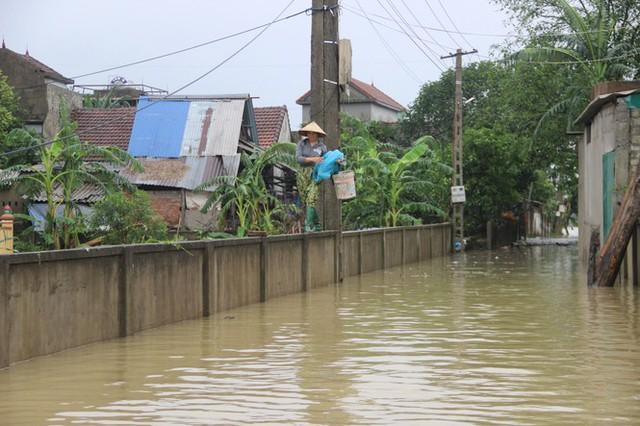 Nước sông Lam dâng cao, Nghệ An ngập lụt trên diện rộng - Ảnh 4.