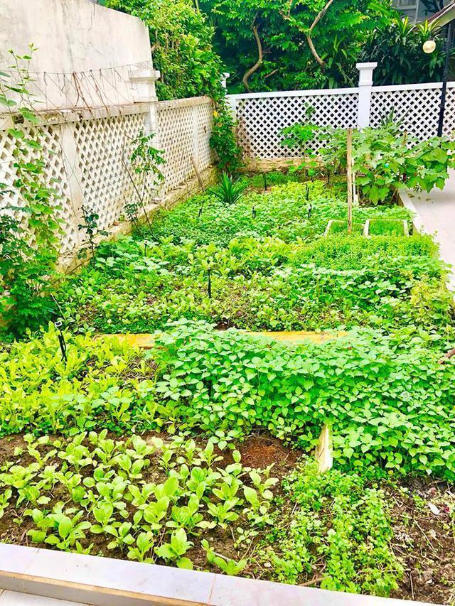 Cuộc sống giản đơn của vợ chồng Công Vinh - Thuỷ Tiên: Cùng nhau chăm sóc vườn rau sạch, tự tay thu hoạch củ quả, ăn không hết đem tặng hàng xóm - Ảnh 1.