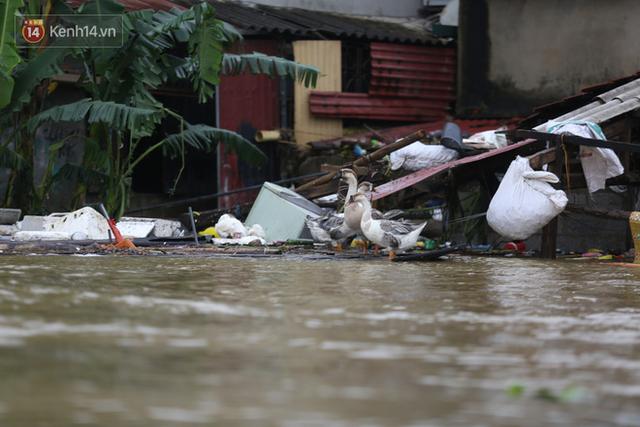 Hơn 2 tuần chịu trận lũ lịch sử, người dân Quảng Bình vẫn phải leo nóc nhà, bơi giữa dòng nước lũ cầu cứu đồ ăn - Ảnh 23.