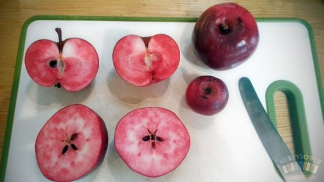 Pendragon: Loại táo vượt qua 14 đối thủ để được đánh giá bổ dưỡng nhất thế giới; ở VN có bán không? - Ảnh 1.