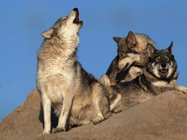 Bảng xếp hạng sát nhân trên Trái Đất, chó nhà lọt vào Top 3, vị trí đầu tiên thuộc về sinh vật vô cùng nhỏ bé - Ảnh 2.