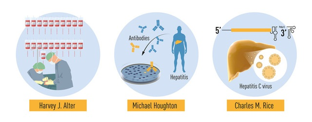 Giải Nobel Y học 2020 vừa được trao cho khám phá về virus viêm gan C đã cứu sống hàng triệu người - Ảnh 3.