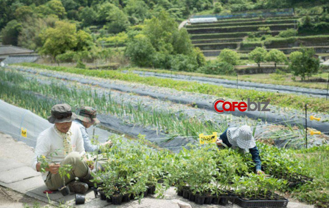 Hai vợ chồng 8X nghỉ việc về quê trồng rau làm ruộng: Thay vì mù quáng theo đuổi vật chất thành thị, chỉ cần có khoảng sân nhỏ và sống chậm rãi đã là hưởng thụ cuộc sống - Ảnh 10.