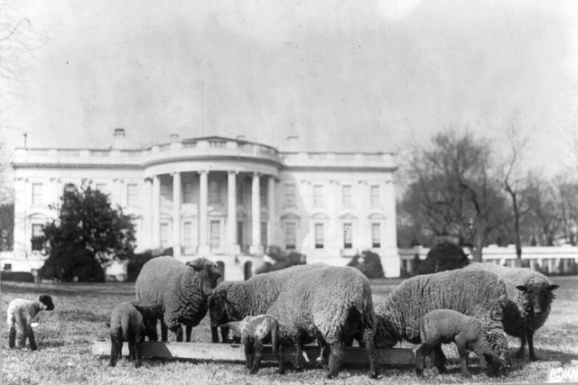 Gà một chân, linh cẩu, gấu trúc...: Những thú cưng độc lạ trong lịch sử Nhà Trắng - Ảnh 2.