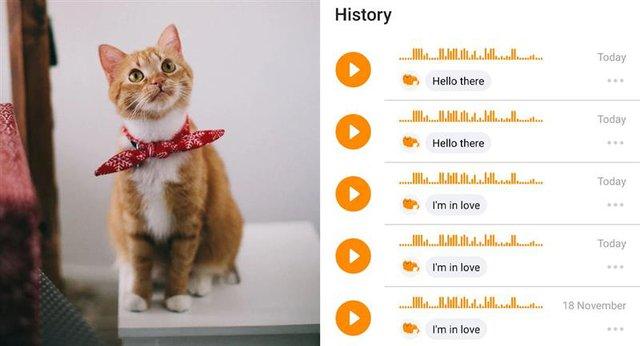 Con người sắp giao tiếp được với loài mèo nhờ ứng dụng này - Ảnh 2.