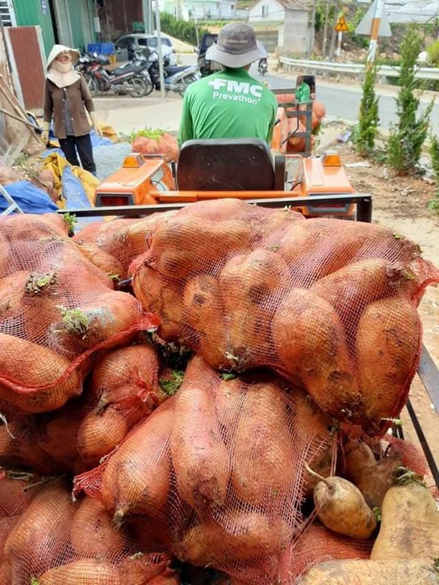 Nhiều nông dân ở Đà Lạt ngậm ngùi đổ bỏ rau do đứt chuỗi liên kết  - Ảnh 1.