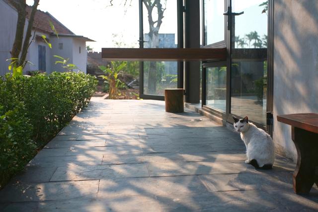 Ngôi nhà ở Nam Định lấy cảm hứng từ cây chuối - Ảnh 16.