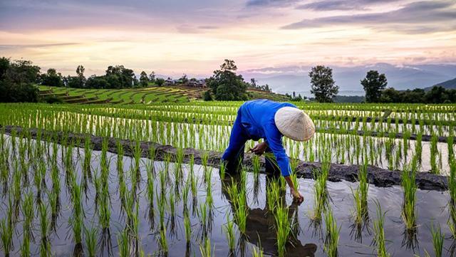 We Love Thailand - Chiến dịch kích cầu du lịch hậu Covid-19 của Thái Lan: Lôi kéo du khách lên núi, về quê trồng lúa, giã gạo trốn dịch - Ảnh 2.
