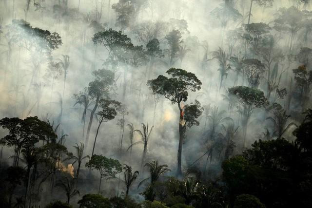 Rừng Amazon vẫn đang cháy ngày một mạnh hơn: 1.202 km2 rừng bị xóa sổ trong 4 tháng, ngang bằng diện tích một quốc gia - Ảnh 1.