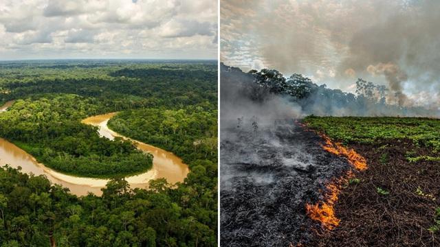 Rừng Amazon vẫn đang cháy ngày một mạnh hơn: 1.202 km2 rừng bị xóa sổ trong 4 tháng, ngang bằng diện tích một quốc gia - Ảnh 2.