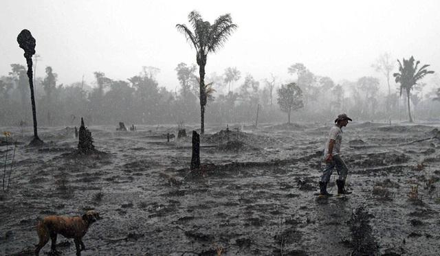Rừng Amazon vẫn đang cháy ngày một mạnh hơn: 1.202 km2 rừng bị xóa sổ trong 4 tháng, ngang bằng diện tích một quốc gia - Ảnh 3.