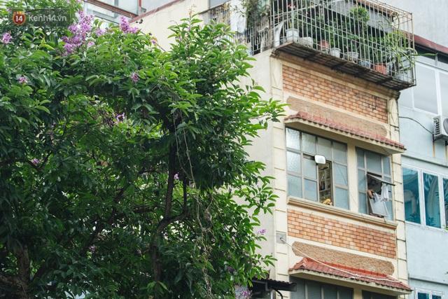 Ảnh, clip: Hoa bằng lăng nhuộm tím phố phường Hà Nội tháng 5 - Ảnh 15.