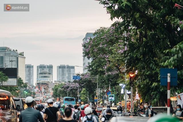 Ảnh, clip: Hoa bằng lăng nhuộm tím phố phường Hà Nội tháng 5 - Ảnh 6.