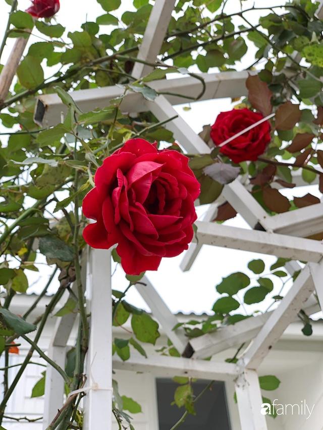 Ngôi nhà vườn 1000m² tọa lạc trên đồi đẹp yên bình với ngoại thất sân vườn rực rỡ sắc màu hoa lá ở Hòa Bình của đôi vợ chồng trẻ - Ảnh 17.