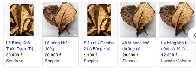 Chuyện thật như đùa, lá bàng khô được rao bán rầm rộ, giá 1.000 đồng/lá - Ảnh 1.