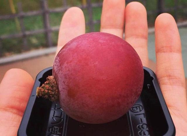 """Ai cũng """"sốc"""" khi nghe qua mức giá của 8 loại trái cây đắt nhất hành tinh này, bỏ ra hàng trăm triệu mới mua được là chuyện bình thường - Ảnh 5."""
