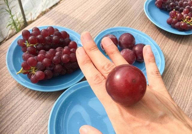 """Ai cũng """"sốc"""" khi nghe qua mức giá của 8 loại trái cây đắt nhất hành tinh này, bỏ ra hàng trăm triệu mới mua được là chuyện bình thường - Ảnh 7."""