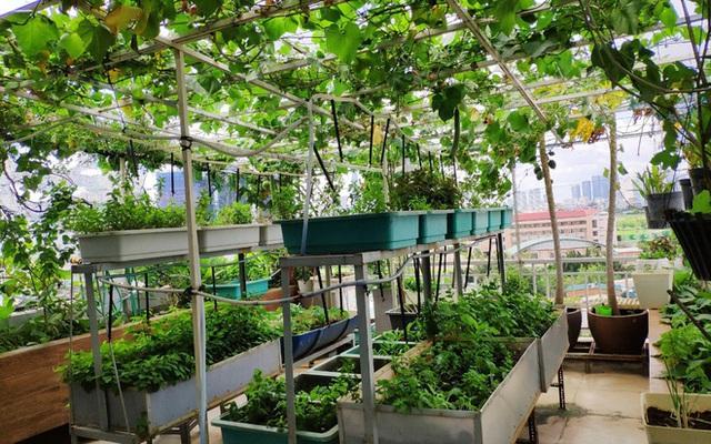 Doanh nhân Sài Gòn trồng cả vườn rau như trang trại và hồ sen trên sân thượng rộng 300m² - Ảnh 1.