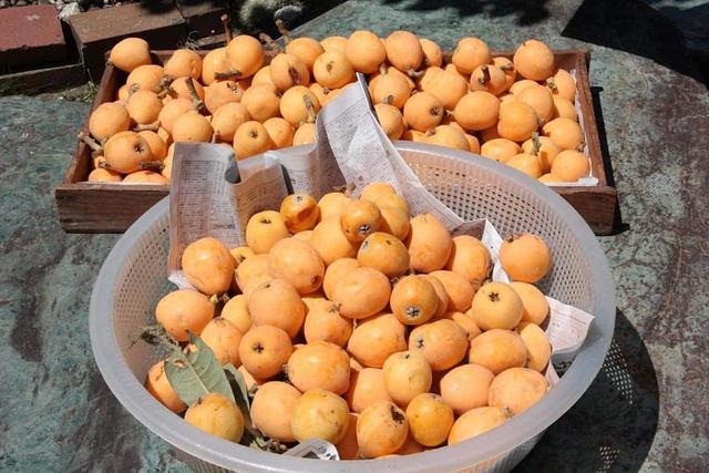 Dân mạng xôn xao thứ quả nhà giàu giá 3-4 triệu/kg ở Việt Nam, bên Nhật lại mọc dại ven đường cho không cả rổ - Ảnh 1.