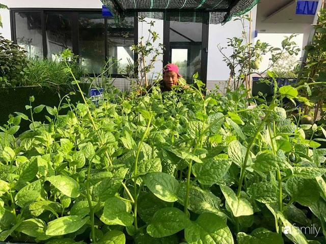 Doanh nhân Sài Gòn trồng cả vườn rau như trang trại và hồ sen trên sân thượng rộng 300m² - Ảnh 18.