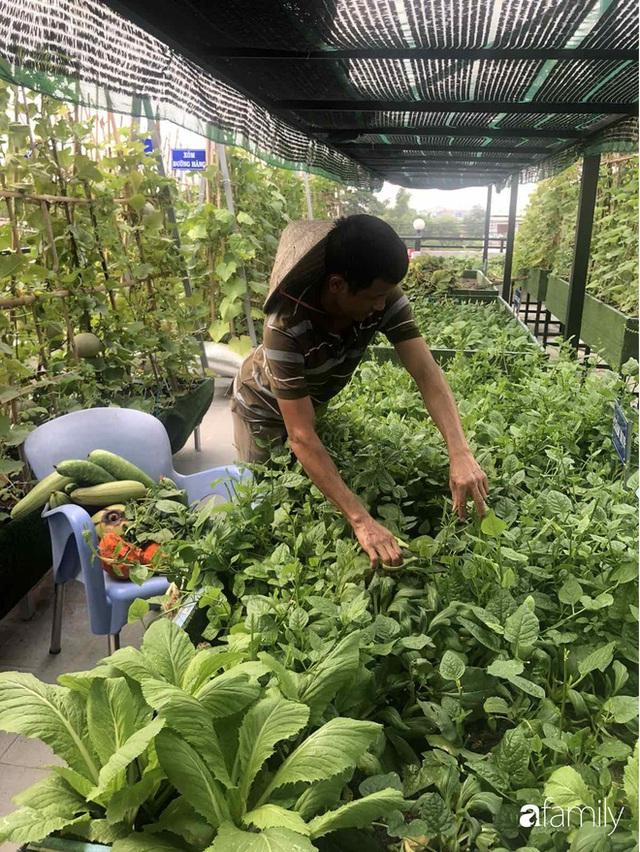 Doanh nhân Sài Gòn trồng cả vườn rau như trang trại và hồ sen trên sân thượng rộng 300m² - Ảnh 20.