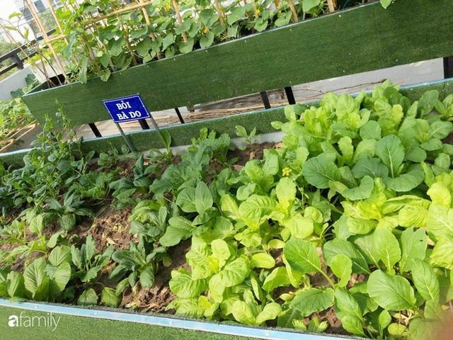 Doanh nhân Sài Gòn trồng cả vườn rau như trang trại và hồ sen trên sân thượng rộng 300m² - Ảnh 21.