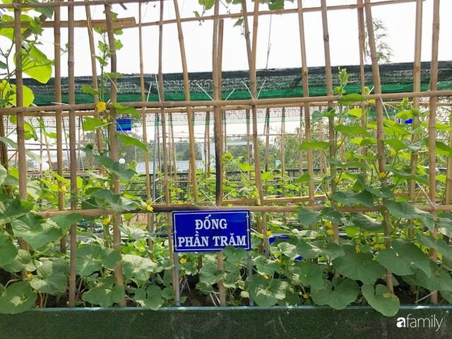 Doanh nhân Sài Gòn trồng cả vườn rau như trang trại và hồ sen trên sân thượng rộng 300m² - Ảnh 25.