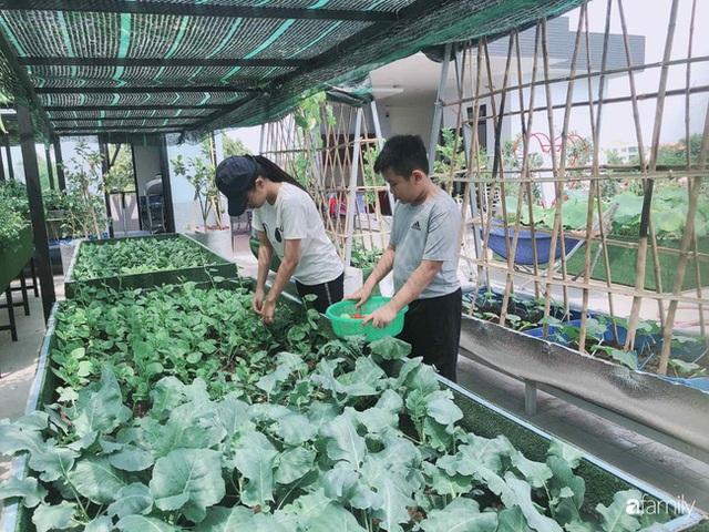 Doanh nhân Sài Gòn trồng cả vườn rau như trang trại và hồ sen trên sân thượng rộng 300m² - Ảnh 26.