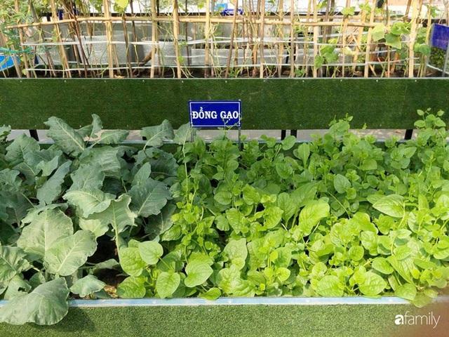 Doanh nhân Sài Gòn trồng cả vườn rau như trang trại và hồ sen trên sân thượng rộng 300m² - Ảnh 4.