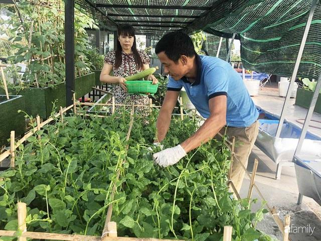 Doanh nhân Sài Gòn trồng cả vườn rau như trang trại và hồ sen trên sân thượng rộng 300m² - Ảnh 5.