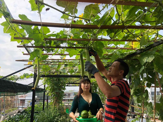 Doanh nhân Sài Gòn trồng cả vườn rau như trang trại và hồ sen trên sân thượng rộng 300m² - Ảnh 7.