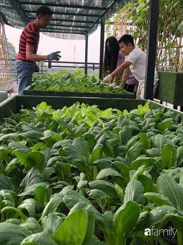 Doanh nhân Sài Gòn trồng cả vườn rau như trang trại và hồ sen trên sân thượng rộng 300m² - Ảnh 10.