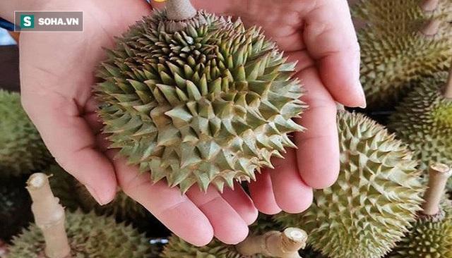 Thực hư sầu riêng Thái Lan nằm gọn trong lòng bàn tay, múi dày siêu ngon 50.000 đồng/quả - Ảnh 1.