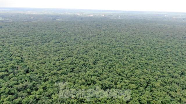 Cận cảnh khu đất hơn 1,8 nghìn ha đang thu hồi làm sân bay Long Thành - Ảnh 1.