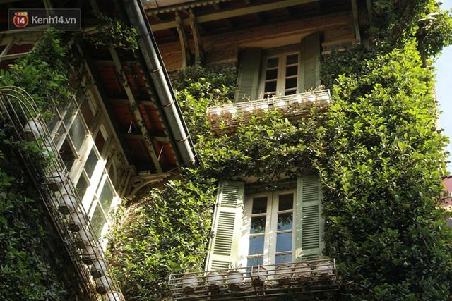 Ảnh: Ngắm ngôi biệt thự 3 tầng phủ kín dây leo chằng chịt ở Hà Nội - Ảnh 13.