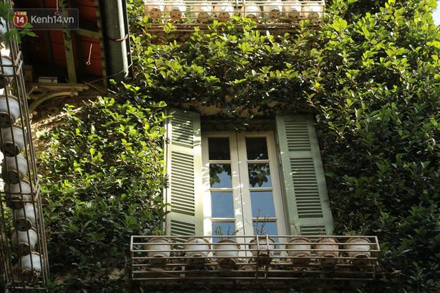 Ảnh: Ngắm ngôi biệt thự 3 tầng phủ kín dây leo chằng chịt ở Hà Nội - Ảnh 5.