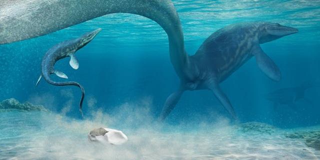 Phát hiện quả trứng lớn nhất thế giới, nghi là của quái vật biển khổng lồ sống tại Nam Cực cách đây 66 triệu năm - Ảnh 1.