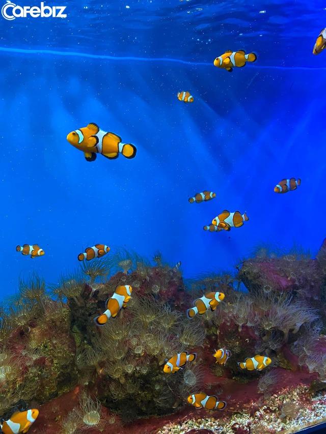 Bỏ túi các địa điểm ăn chơi đẹp hút hồn ở Nha Trang: Biển vừa xanh vừa mát, Bảo tàng Hải dương học check-in đầy màu sắc, siêu nhiều quán cafe đẹp mê ly - Ảnh 3.