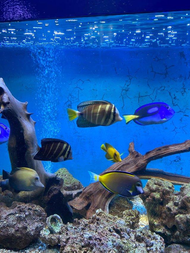 Bỏ túi các địa điểm ăn chơi đẹp hút hồn ở Nha Trang: Biển vừa xanh vừa mát, Bảo tàng Hải dương học check-in đầy màu sắc, siêu nhiều quán cafe đẹp mê ly - Ảnh 4.
