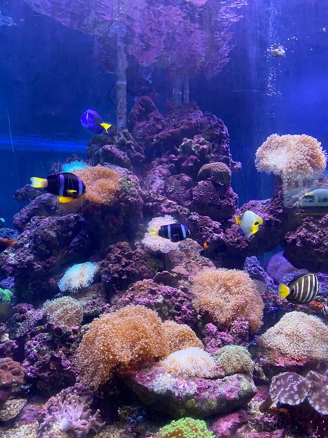 Bỏ túi các địa điểm ăn chơi đẹp hút hồn ở Nha Trang: Biển vừa xanh vừa mát, Bảo tàng Hải dương học check-in đầy màu sắc, siêu nhiều quán cafe đẹp mê ly - Ảnh 2.